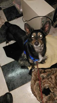 Maxcotea | Foto de Yako - Perro, Raza: Otro | Fotos de Yako | Maxcotea, Adopción de mascotas. Adopción de perros. Adopción de gatos.