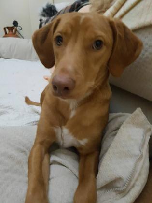 Maxcotea | Foto de Bruno - Perro, Raza: Otro | Maxcotea, Adopción de mascotas. Adopción de perros. Adopción de gatos.