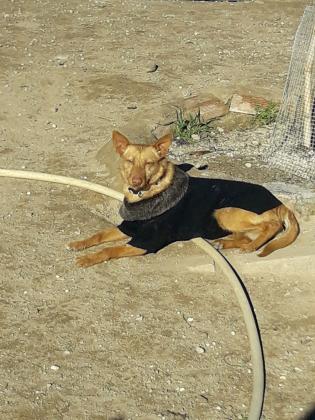 Maxcotea | Foto de Lady - Perro, Raza: Otro | Fotos de Lady | Maxcotea, Adopción de mascotas. Adopción de perros. Adopción de gatos.