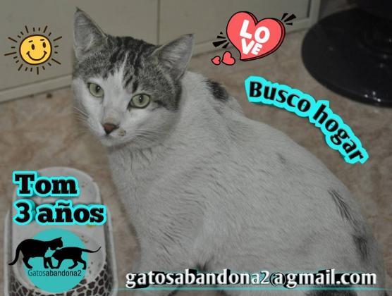 Maxcotea | Foto de TOM - Gato, Raza: Gato común europeo | Maxcotea, Adopción de mascotas. Adopción de perros. Adopción de gatos.