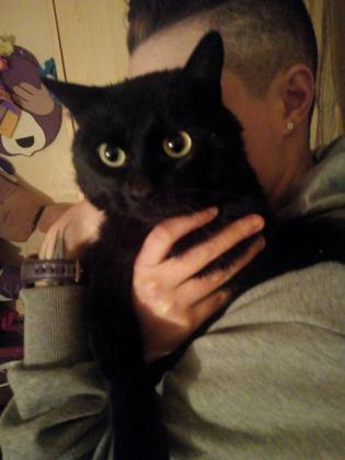 Maxcotea | Foto de BALÚ - Gato, Raza: Gato común europeo | Maxcotea, Adopción de mascotas. Adopción de perros. Adopción de gatos.
