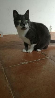 Maxcotea | Foto de ELIA - Gato, Raza: Gato común europeo | Maxcotea, Adopción de mascotas. Adopción de perros. Adopción de gatos.