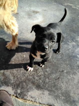 Maxcotea | Foto de Yaki - Perro, Raza: Otro | Maxcotea, Adopción de mascotas. Adopción de perros. Adopción de gatos.