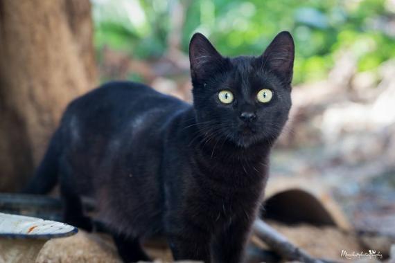 Maxcotea | Foto de SABRINA - Gato, Raza: Gato común europeo | Maxcotea, Adopción de mascotas. Adopción de perros. Adopción de gatos.