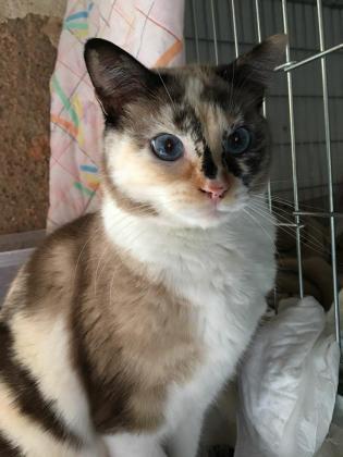 Maxcotea | Foto de PICHI - Gato, Raza: Gato común europeo | Maxcotea, Adopción de mascotas. Adopción de perros. Adopción de gatos.