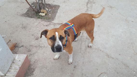 Maxcotea | Foto de Betty - Perro, Raza: Otro | Maxcotea, Adopción de mascotas. Adopción de perros. Adopción de gatos.