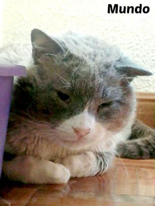 Maxcotea | Foto de Mundo - Gato, Raza: Gato común europeo | Maxcotea, Adopción de mascotas. Adopción de perros. Adopción de gatos.
