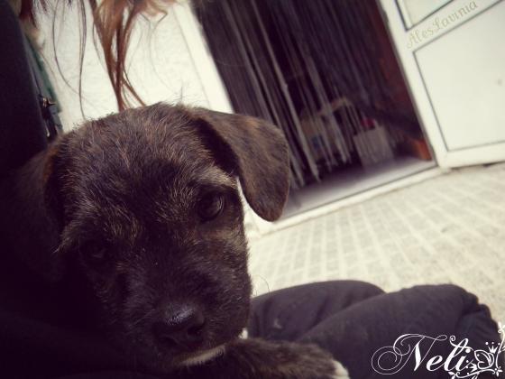Maxcotea   Foto de Neli - Perro, Raza: Otro   Maxcotea, Adopción de mascotas. Adopción de perros. Adopción de gatos.