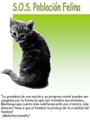 Maxcotea | Foto del maxcotero sosfelinos | Maxcotea, Adopción de mascotas. Adopción de perros. Adopción de gatos.