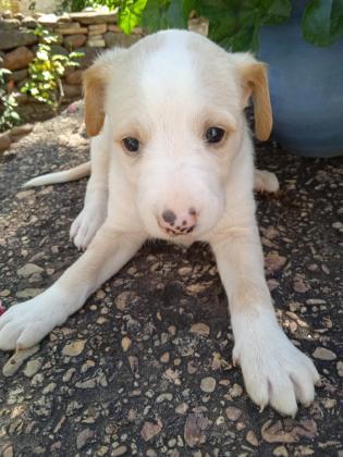 Maxcotea | Foto de Jara - Perro, Raza: Otro | Jara.  | Maxcotea, Adopción de mascotas. Adopción de perros. Adopción de gatos.