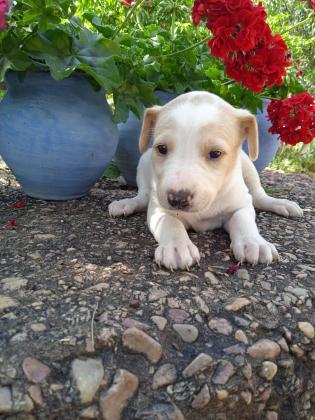 Maxcotea | Foto de Tammy - Perro, Raza: Otro | Maxcotea, Adopción de mascotas. Adopción de perros. Adopción de gatos.