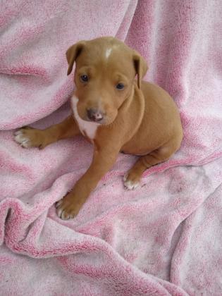 Maxcotea | Foto de Orion - Perro, Raza: Otro | Maxcotea, Adopción de mascotas. Adopción de perros. Adopción de gatos.