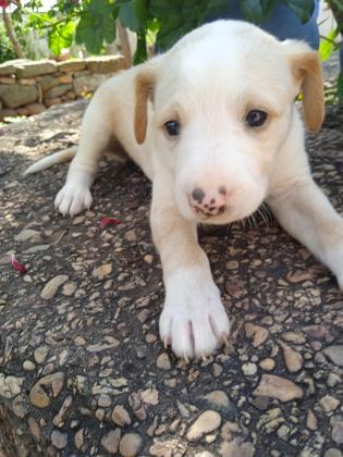 Maxcotea | Foto de Jara - Perro, Raza: Otro | Maxcotea, Adopción de mascotas. Adopción de perros. Adopción de gatos.