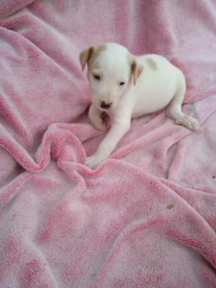 Maxcotea | Foto de Elmer - Perro, Raza: Otro | Maxcotea, Adopción de mascotas. Adopción de perros. Adopción de gatos.