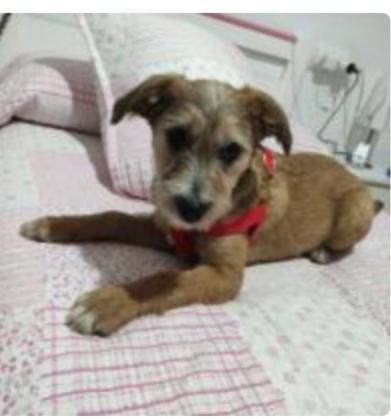 Maxcotea | Foto de Neska - Perro, Raza: Otro | Maxcotea, Adopción de mascotas. Adopción de perros. Adopción de gatos.