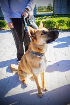 Maxcotea | Foto de ROCO - Perro, Raza: Otro | ROCO BUSCA UNA FAMILIA DEFINITIVA | Maxcotea, Adopción de mascotas. Adopción de perros. Adopción de gatos.
