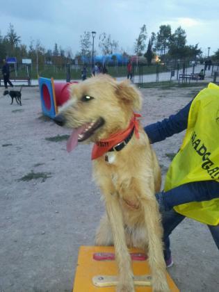 Maxcotea | Foto de BARBAS - Perro, Raza: Otro | BARBAS BUSCA UN BUEN HOGAR | Maxcotea, Adopción de mascotas. Adopción de perros. Adopción de gatos.