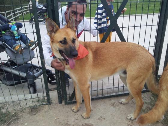 Maxcotea | Foto de ROCO - Perro, Raza: Otro | Maxcotea, Adopción de mascotas. Adopción de perros. Adopción de gatos.