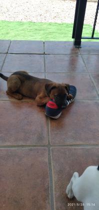 Maxcotea | Foto de Akela - Perro, Raza: Otro | Akela | Maxcotea, Adopción de mascotas. Adopción de perros. Adopción de gatos.