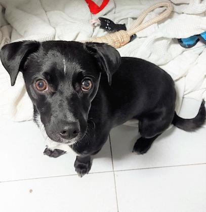 Maxcotea | Foto de Bast - Perro, Raza: Otro | Maxcotea, Adopción de mascotas. Adopción de perros. Adopción de gatos.