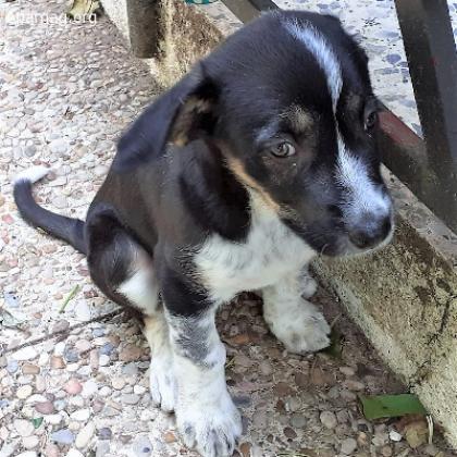 Maxcotea   Foto de Cookie - Perro, Raza: Otro   Maxcotea, Adopción de mascotas. Adopción de perros. Adopción de gatos.