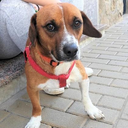 Maxcotea   Foto de Mufasa - Perro, Raza: Sin Raza o Mestizos   Maxcotea, Adopción de mascotas. Adopción de perros. Adopción de gatos.