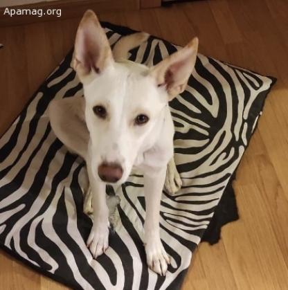 Maxcotea | Foto de Phoebe - Perro, Raza: Sin Raza o Mestizos | Maxcotea, Adopción de mascotas. Adopción de perros. Adopción de gatos.