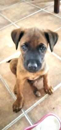 Maxcotea | Foto de Akela - Perro, Raza: Otro | Maxcotea, Adopción de mascotas. Adopción de perros. Adopción de gatos.