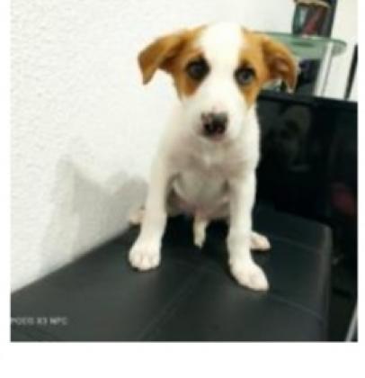 Maxcotea | Foto de Nahuel - Perro, Raza: Otro | Maxcotea, Adopción de mascotas. Adopción de perros. Adopción de gatos.