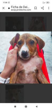 Maxcotea | Foto de Deimos - Perro, Raza: Otro | Deimos | Maxcotea, Adopción de mascotas. Adopción de perros. Adopción de gatos.