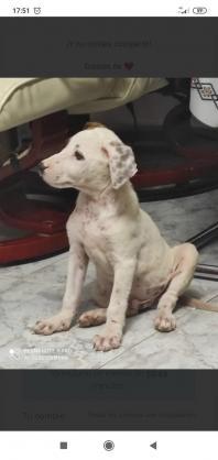 Maxcotea   Foto de Altair - Perro, Raza: Otro   Altair   Maxcotea, Adopción de mascotas. Adopción de perros. Adopción de gatos.