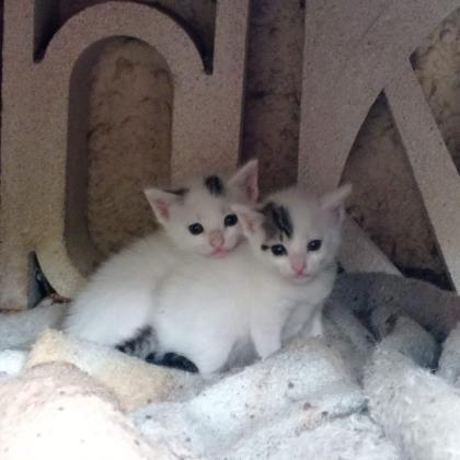 Maxcotea | Foto de Lisa y roxan - Gato, Raza: Otro | Maxcotea, Adopción de mascotas. Adopción de perros. Adopción de gatos.