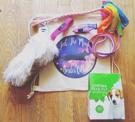 Maxcotea | Foto del maxcotero lizzyliz | Maxcotea, Adopción de mascotas. Adopción de perros. Adopción de gatos.
