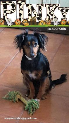 Maxcotea | Foto de PINKY - Perro, Raza: Otro | Maxcotea, Adopción de mascotas. Adopción de perros. Adopción de gatos.