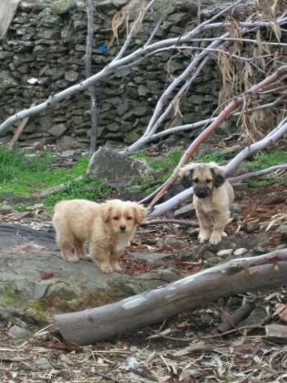 Maxcotea | Foto de Cachorros en adopción - Perro, Raza: Otro | Maxcotea, Adopción de mascotas. Adopción de perros. Adopción de gatos.