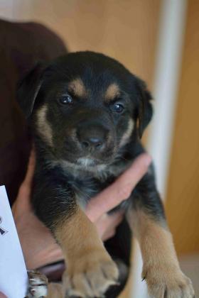 Maxcotea | Foto de Ámbar - Perro, Raza: Otro | Maxcotea, Adopción de mascotas. Adopción de perros. Adopción de gatos.