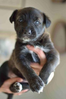 Maxcotea | Foto de Donna - Perro, Raza: Otro | Maxcotea, Adopción de mascotas. Adopción de perros. Adopción de gatos.