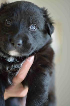 Maxcotea | Foto de Sombra - Perro, Raza: Otro | Maxcotea, Adopción de mascotas. Adopción de perros. Adopción de gatos.