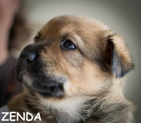 Maxcotea | Foto de Zenda - Perro, Raza: Otro | Maxcotea, Adopción de mascotas. Adopción de perros. Adopción de gatos.