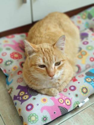 Maxcotea | Foto de Mía - Gato, Raza: Gato común europeo | Maxcotea, Adopción de mascotas. Adopción de perros. Adopción de gatos.