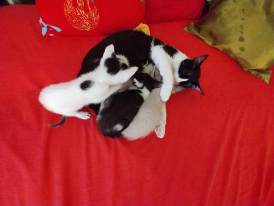 Maxcotea | Foto de Venecia - Gato, Raza: Gato común europeo | Maxcotea, Adopción de mascotas. Adopción de perros. Adopción de gatos.