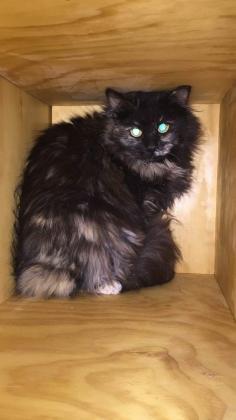 Maxcotea | Foto de India - Gato, Raza: Gato común europeo | Maxcotea, Adopción de mascotas. Adopción de perros. Adopción de gatos.