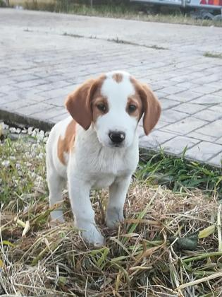 Maxcotea | Foto de Pipo - Perro, Raza: Otro | Maxcotea, Adopción de mascotas. Adopción de perros. Adopción de gatos.