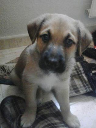 Maxcotea | Foto de Kimo - Perro, Raza: Otro | Maxcotea, Adopción de mascotas. Adopción de perros. Adopción de gatos.