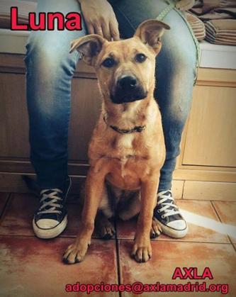 Maxcotea | Foto de LUNA ABANDONADA EN UN ASCENSOR - Perro, Raza: Otro | Maxcotea, Adopción de mascotas. Adopción de perros. Adopción de gatos.