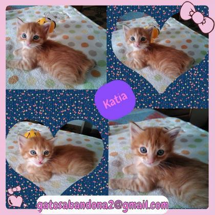 Maxcotea | Foto de katia - Gato, Raza: Gato común europeo | Maxcotea, Adopción de mascotas. Adopción de perros. Adopción de gatos.
