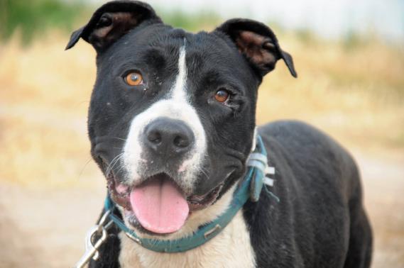 Maxcotea | Foto de SOUFFLE EN ADOPCION - Perro, Raza: Otro | Maxcotea, Adopción de mascotas. Adopción de perros. Adopción de gatos.
