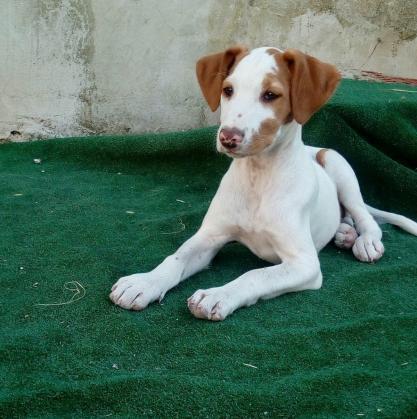 Maxcotea | Foto de Perla - Perro, Raza: Otro | Maxcotea, Adopción de mascotas. Adopción de perros. Adopción de gatos.