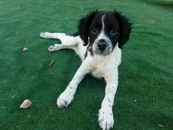 Maxcotea | Foto de Kiwi - Perro, Raza: Otro | Maxcotea, Adopción de mascotas. Adopción de perros. Adopción de gatos.