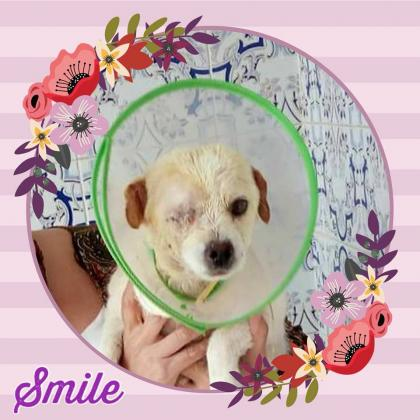 Maxcotea | Foto de Smile - Perro, Raza: Otro | Maxcotea, Adopción de mascotas. Adopción de perros. Adopción de gatos.
